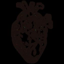 Impresionante corazón anatómico