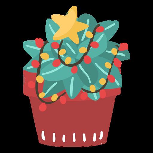 Cactus navidad impresionante