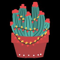 Cool christmas cactus