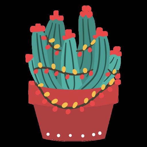 Cactus de navidad fresco