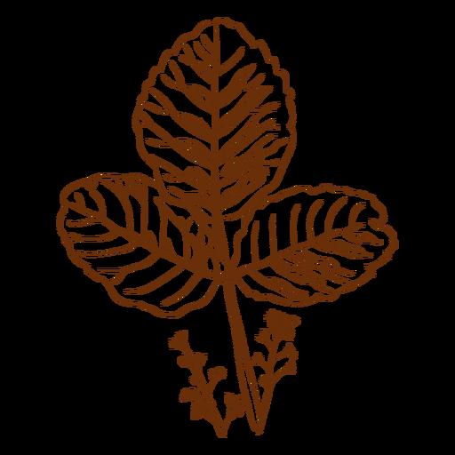 Flora estudia planta
