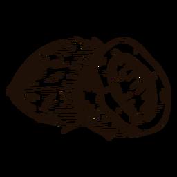 Dibujado a mano de coco