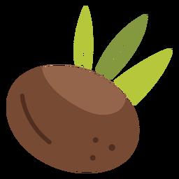 Icono de coco