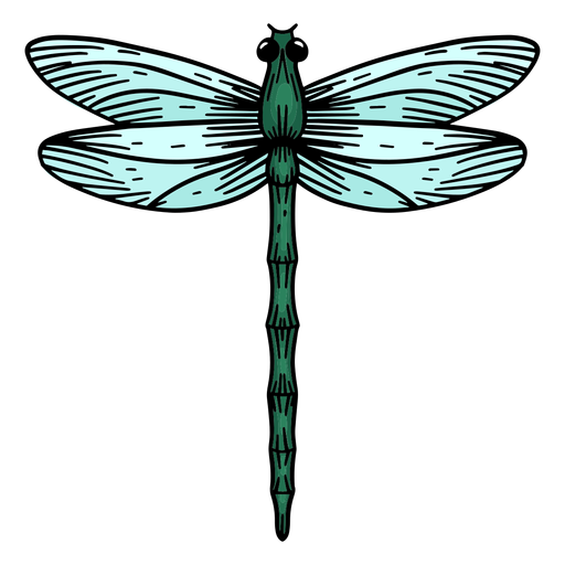 Hand drawn dragonfly Transparent PNG