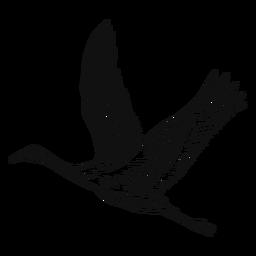 Black and white heron