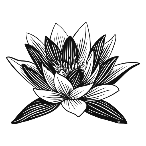 Lotus flower black and white Transparent PNG