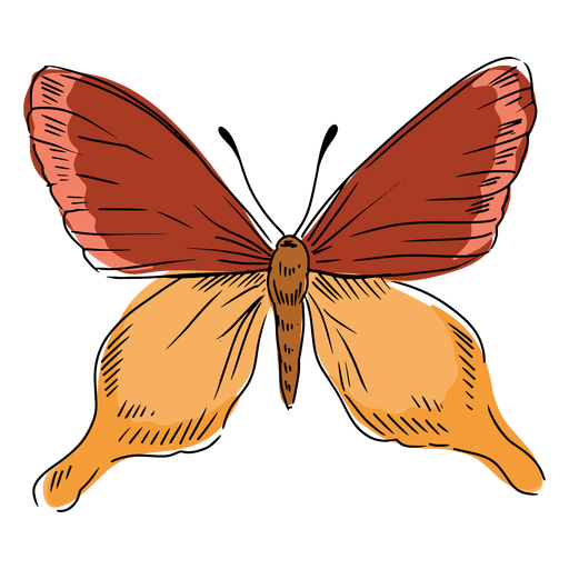 Butterfly illustration hand drawn