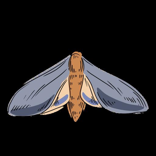 Ilustración de polilla gris