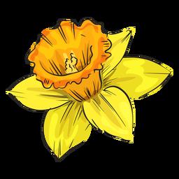 Gelbe Blume der Narzissenseite