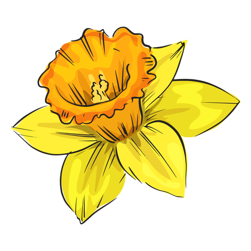 Narcissus side yellow flower Transparent PNG