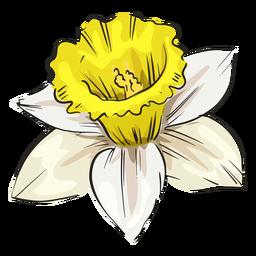 Narciso flor blanca