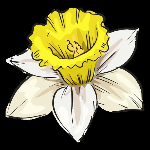 Narcissus white flower