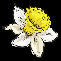 Narcissus white flower side