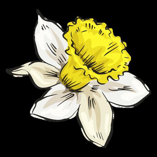 Lado de flor branca de narciso