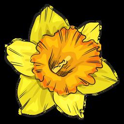 Narzisse gelbe Blume