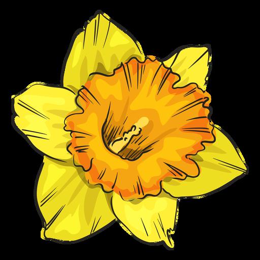 Narciso amarelo flor