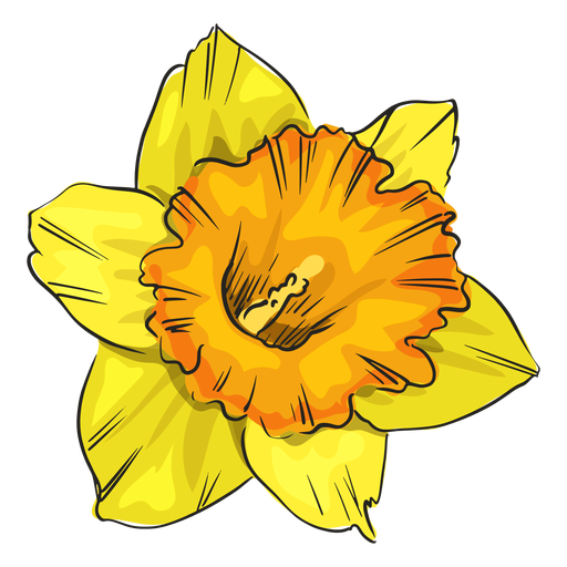 Narcissus yellow flower Transparent PNG