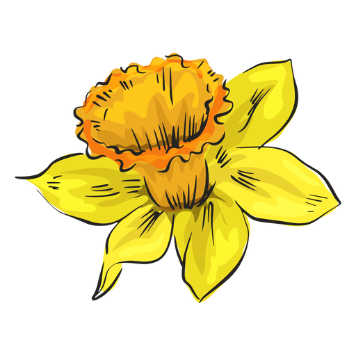 Narcissus yellow flower side