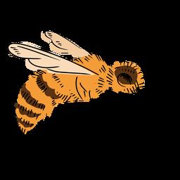 Ilustración de abeja lateral