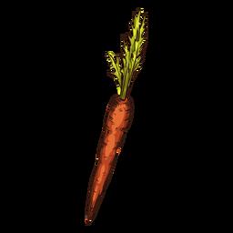 Ilustración de zanahoria