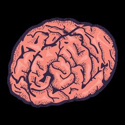 Ilustración realista del cerebro