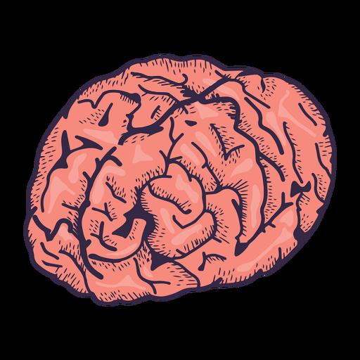Ilustración realista del cerebro Transparent PNG