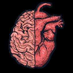 Ilustración realista del cerebro del corazón