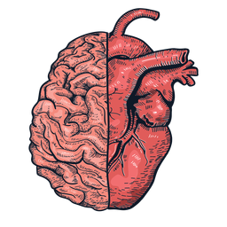 Realistic heart brain illustration