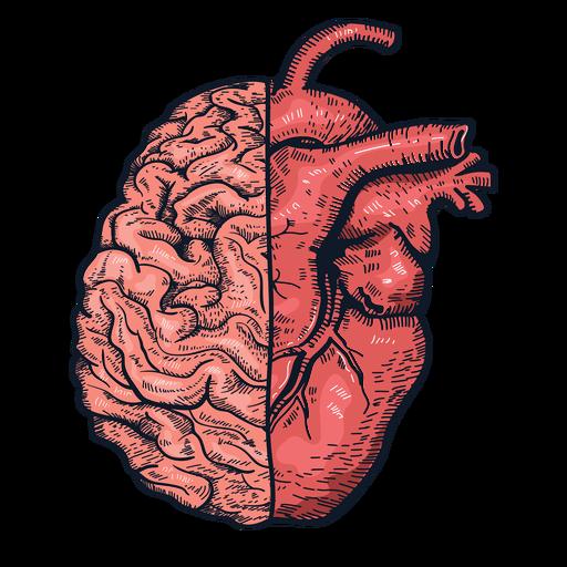 Realistic heart brain illustration