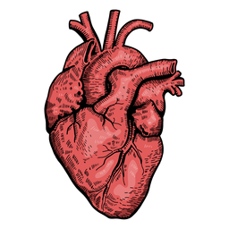 Realistic heart illustration