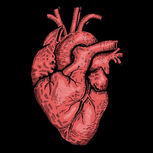 Realistic heart illustration Transparent PNG