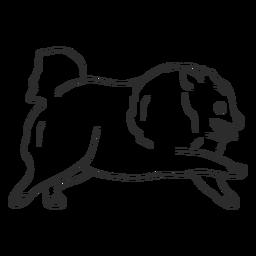 Pomerania perro corriendo golpe