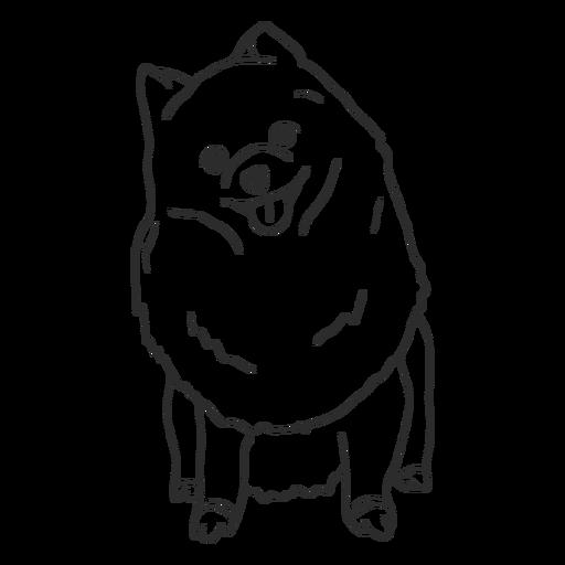 Pomeranian dog sitting stroke