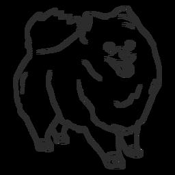 Golpe de perro Pomerania