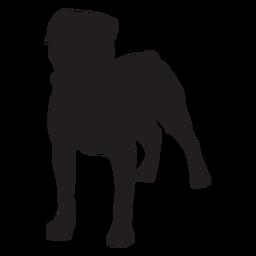 Perro Rottweiler negro