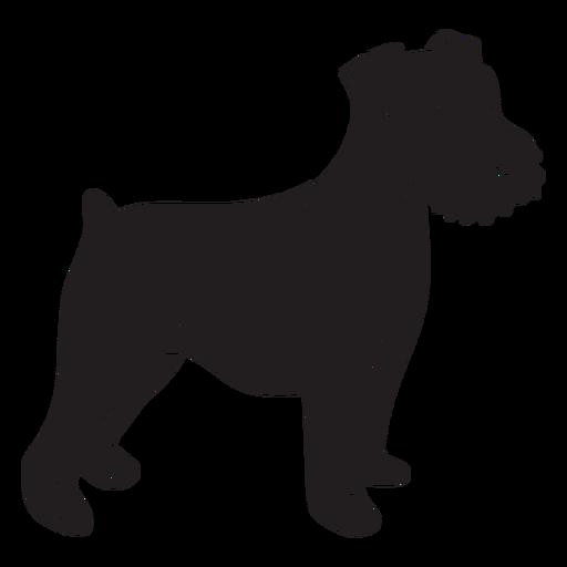 Schnauzer dog side black