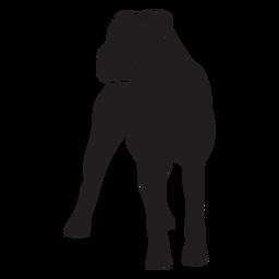 Boxer dog black