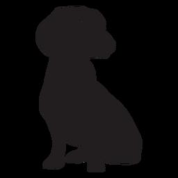 Perro Dachshund negro