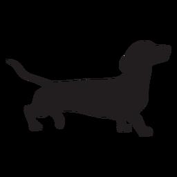 Dachshund cão lado preto