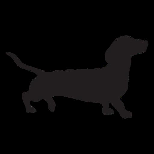 Lado de perro Dachshund negro