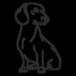 Golpe de perro Dachshund