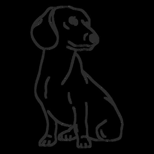 Dachshund dog stroke