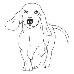 Dachshund dog walking stroke
