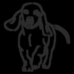 Dachshund perro caminar trazo