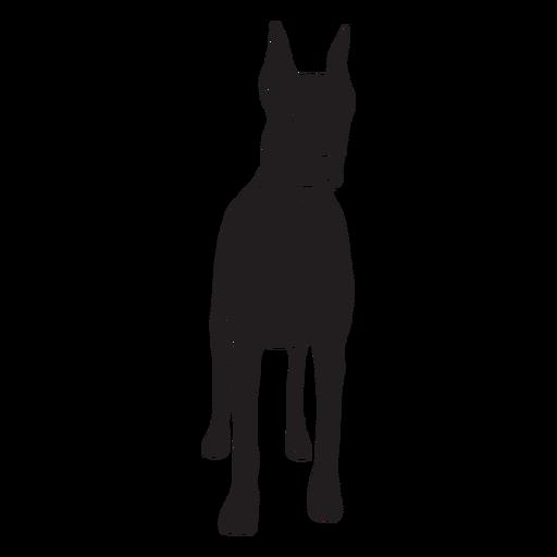 Doberman dog black