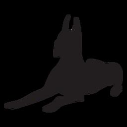 Gran danés perro negro