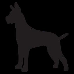 Gran danés perro lado negro