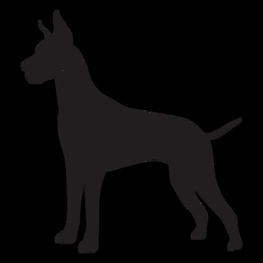 Great dane dog side black
