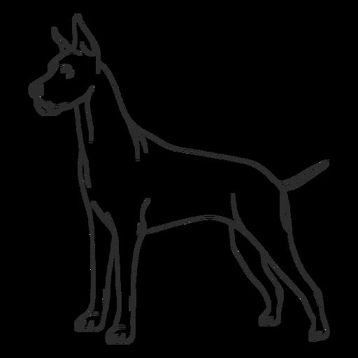 Great dane dog side stroke