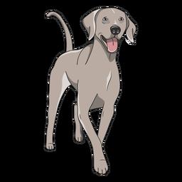 Ilustración de perro weimaraner feliz